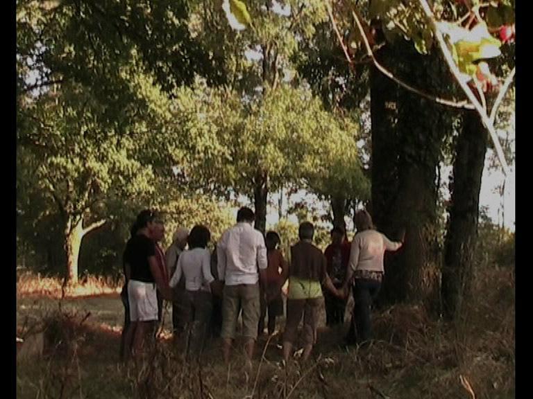 L'Ombre des arbres n'existe plus