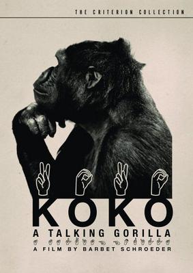 Koko, le gorille qui parle - Jaquette DVD Etats-Unis