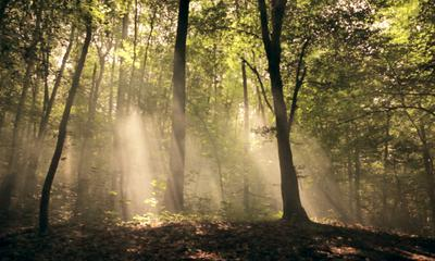 Derrière les arbres