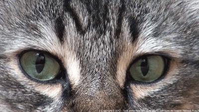Reflets dans l'œil du chat