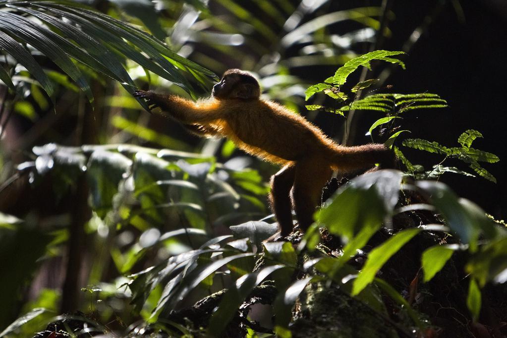 Amazonia de Thierry Ragobert (2013) - UniFrance
