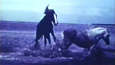 Le Songe des chevaux sauvages