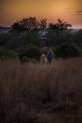 Mia et le lion blanc - © Emmanuel Guionet - Galatée Films - Outside Films