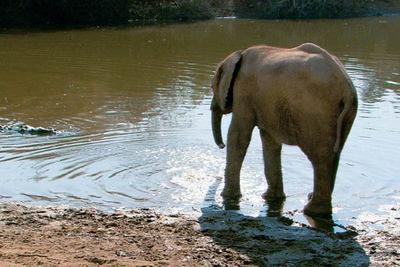 La Balade des elephants / 仮題:象の散歩