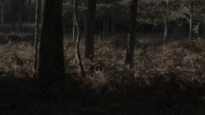 Les Allées sombres