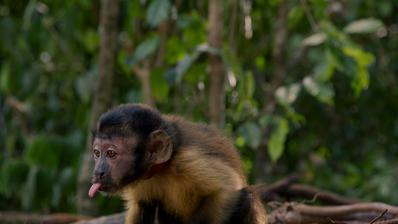 Amazonia - © 2013 Le-Pacte - Biloba Films -Gullane.