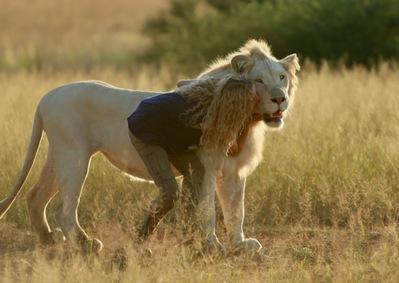 Mia et le lion blanc - © Kevin Richardson - Galatée Films - Outside Films