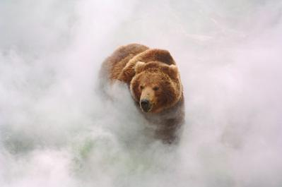 Terre des ours (3D) - © Igor Shpilenok