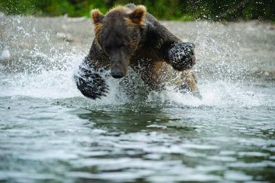 Land of the Bears - © Igor Shpilenok