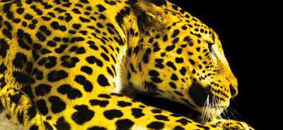 Locarno dévoile ses sélections pour l'édition 2015
