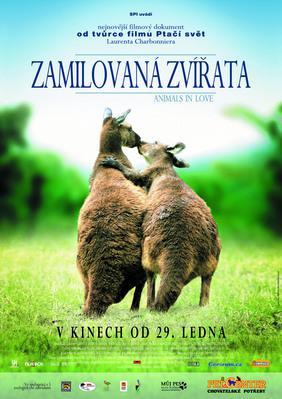 Les Animaux amoureux - Poster - République tchèque