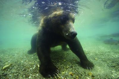 Terre des ours (3D) - © Michel Roggo