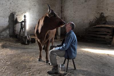 La Vaca - © Jean-Claude Lother