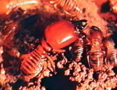 La Vie des termites