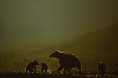 Land of the Bears - © Sergey Gorshkov