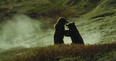 Terre des ours (3D) - © Les Films en Vrac