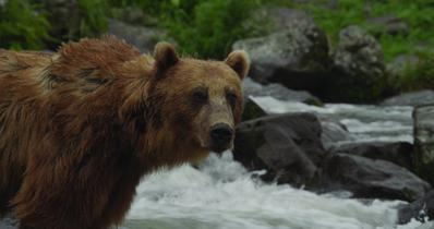 Land of the Bears - © Les Films en Vrac