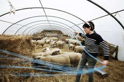 A Modern Shepherdess - © A. Keil