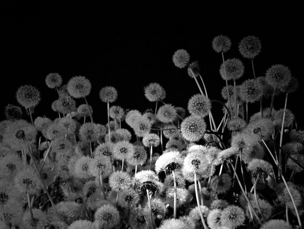 Natural Process Activation #3 Bloom