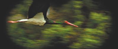 L'Ornithologue