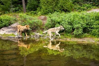 Le Loup et le Lion - © 2020 Mai Juin Productions - Galatée Films - Wematin Productions - Studiocanal - M6 Films  Photo Emmanuel Guionet