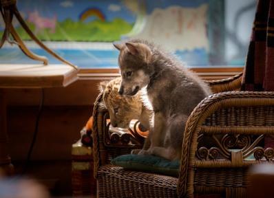 El lobo y el león - © 2020 Mai Juin Productions - Galatée Films - Wematin Productions - Studiocanal - M6 Films  Photo Emmanuel Guionet