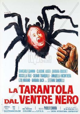 La tarántula del vientre negro - Italy