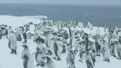 March of the Penguins 2 - The Call