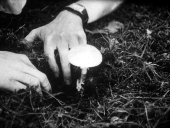 Le Champignon qui tue (L'amanite phalloïde)