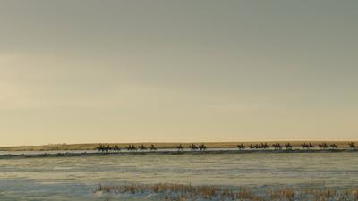The Ride - La Chevauchée - © Rouge International