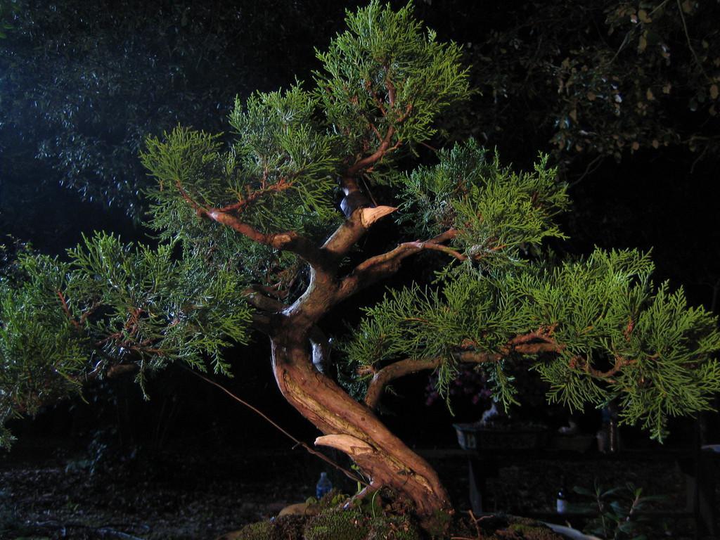 L'Homme aux bonsaïs