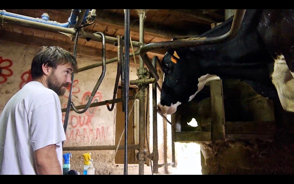 Les Vaches n'auront plus de nom