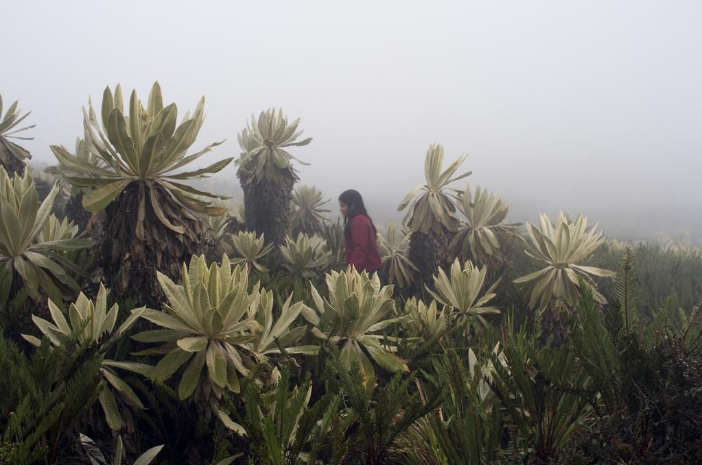 Floralba Achicanoy