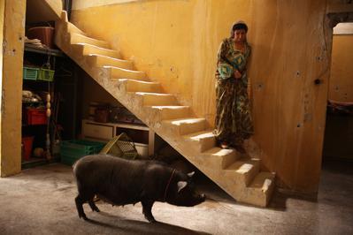 Cochon de Gaza