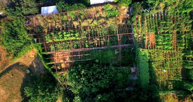 My Grandpa's Garden