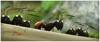 Minuscule – La Vallée des fourmis perdues