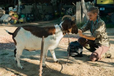 Les Vétos - © Les Films du 24 - France 3 Cinéma - Roger Do Minh