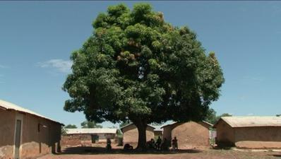 Sous l'arbre à palabres