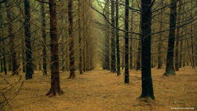 Le Temps des forêts
