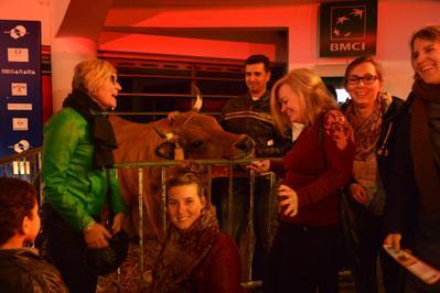 Magnífica apertura del 1er Festival de Cine Francés en Marruecos - La vache Jacqueline, star de la soirée