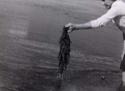 Comment naissent des méduses