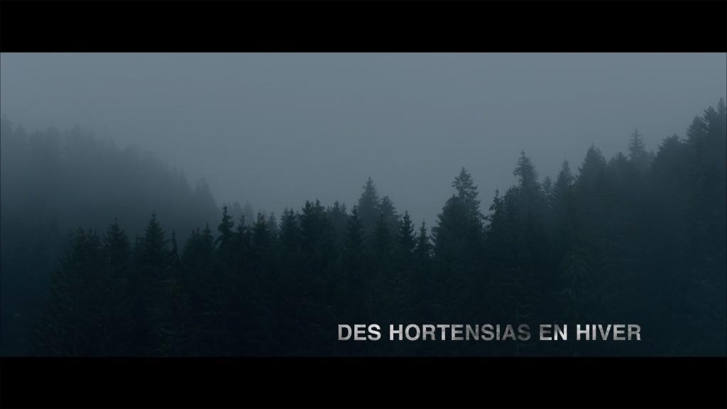 Des hortensias en hiver
