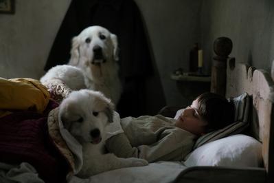 Belle et Sébastien 3, le dernier chapitre - © Gaumont