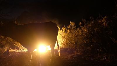 Luces del Desierto