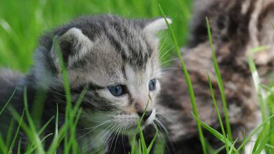The Wildlife of domestic animals
