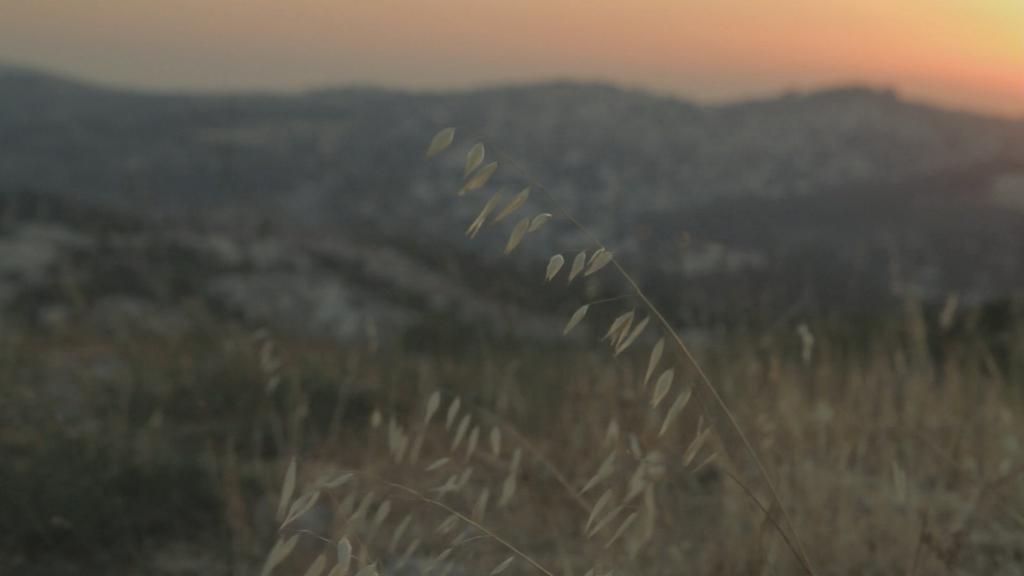 Yoav  Damti