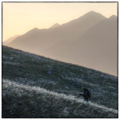 Wolf Walk - © MC4 - Bertrand Bodin