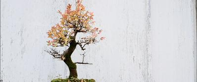 Koan of Spring