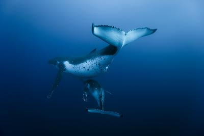 Oceans - © Roberto Rinaldi