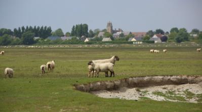 A Modern Shepherdess - © Lux For Film